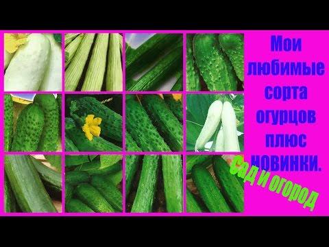 Мои любимые сорта огурцов плюс новинки. Сад и огород выпуск 146