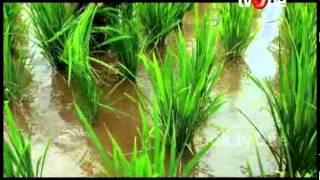 Gasologi-Beras Asli Lokal Cianjur dari Gasol Pertanian Organik