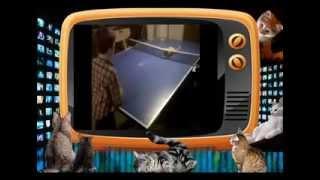 Кошачий теннис. Прикольное видео про кошек!