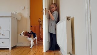 Cute Dogs Playing Hide and Seek | Fun with Dogs