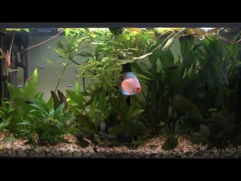 Setting up a Tropical Freshwater Aquarium