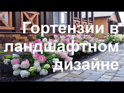 Гортензии в ландшафтном дизайне по Москве и Московской области