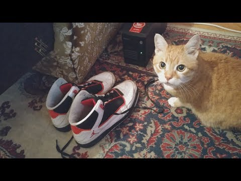 Cat Playing With Jordan Sneakers