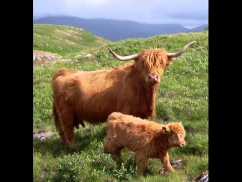 Ulva Island Inner Hebrides Scotland