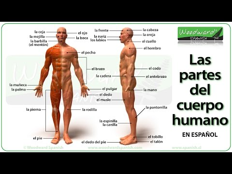 Parts of the Body in Spanish - Las partes del cuerpo humano - YouTube