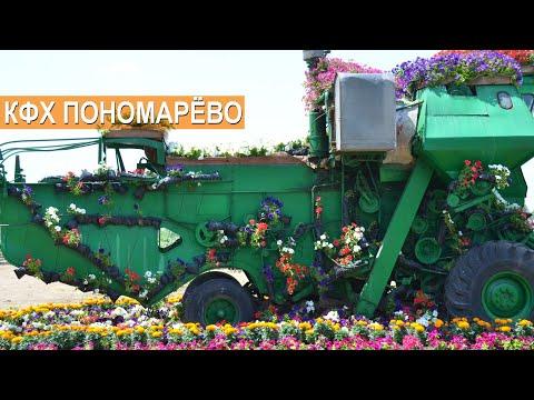 ЗЕРНОВЫЕ, МАСЛИЧНЫЕ, БАХЧЕВЫЕ КУЛЬТУРЫ. КФХ Пономарёво. Рассказ о хозяйстве