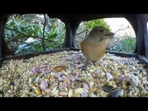 Drukte om de vogelvoederplaats door Henk Dirksen