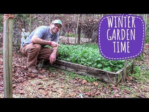 Growing a Winter Vegetable Garden – UPDATE & COMPOSTING