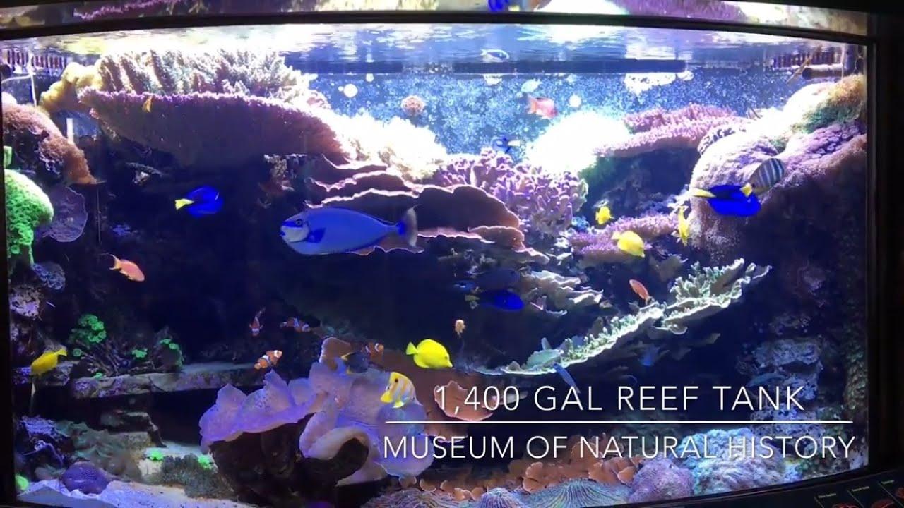 1 400 gal reef tank smithsonian museum of natural for Aquarium washington dc