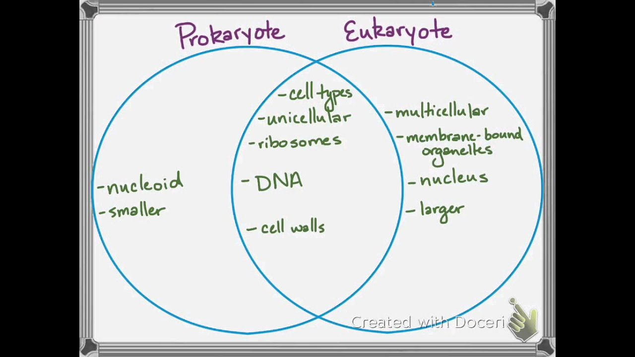Quarter 2 ReviewProkaryotes vs Eukaryotes YouTube – Prokaryotic and Eukaryotic Cells Worksheet