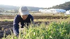 Kurkku Fields forever: a sustainable farm in Chiba for the next generation