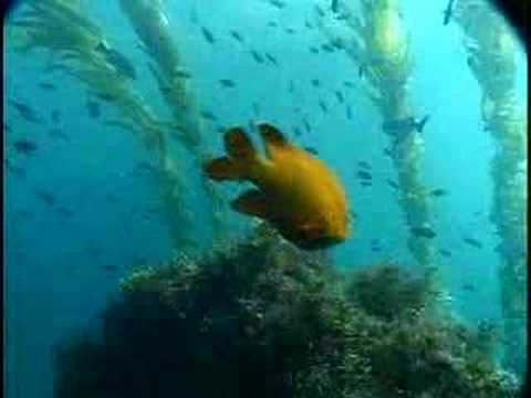 National Marine Sanctuary Introduction Video