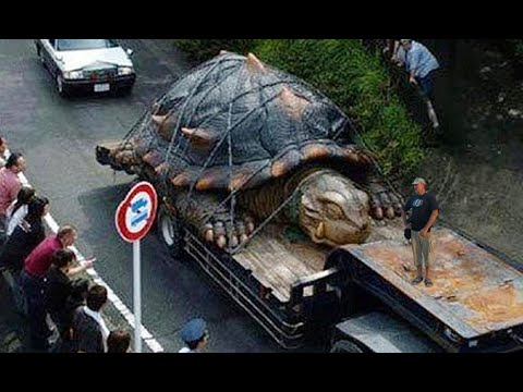 Thumbnail: WORLD'S BIGGEST TORTOISE - real or fake?
