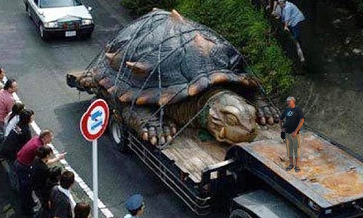 The biggest turtle in the world: photo 78