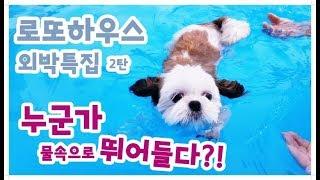로또하우스 외박특집[2탄]  수영장가다!! feat. …