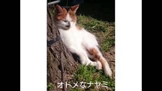好きなねこを発見して、見つめるネコ‼️…見つめられる#三毛猫はアヤシイストーカーと思い立ち去ろうとする… がっかりした#ハチワレ猫は思...