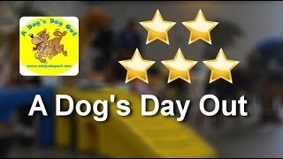 a dog s day out reviews 703 698 3647 vienna great review from megan klose