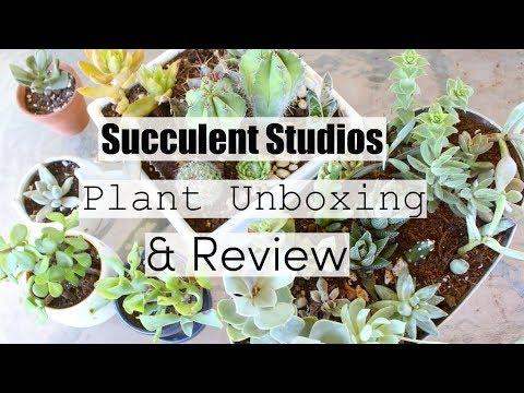 Succulent Studios Subscription Unboxing Amp Review Online