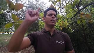CLARIVIDÊNCIA - TÉCNICA FRACTAL ESSA NÃO FALHA MESMO CLARIVIDÊNCIA GARANTIDA - CADF 218.