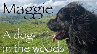 Maggie - My Four Legged Companion in the Woods.