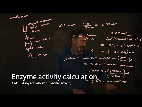 Enzyme calculations - enzyme activity and specific activity