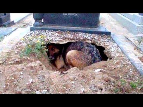 Они думали эта собака оплакивает своего хозяина,но оказалось, что она согревала своих щенят