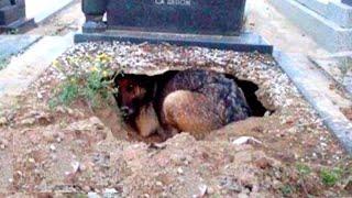 Они думали эта собака оплакивает своего хозяина,но оказалось за этим стоит что-то более трогательное