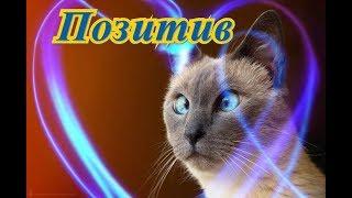 Смешные животные Смешное видео о животных Позитив Создай себе хорошее настроение