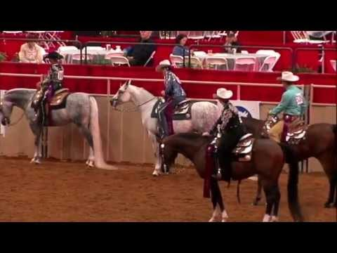 2015 U.S. Nationals: Arabian Western Pleasure Select, Megga Starr