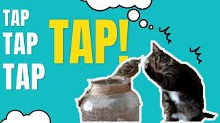 Gentle Kitty Touching Bird