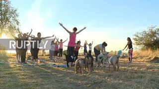 No Kidding! Yoga with goats takes off in Oregon