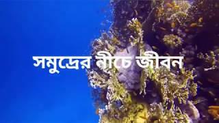 Download Video সমুদ্রের নিচে জীবন Life under the sea - সমুদ্রের তলদেশে অদ্ভুত প্রাণী সাগর কুসুম MP3 3GP MP4