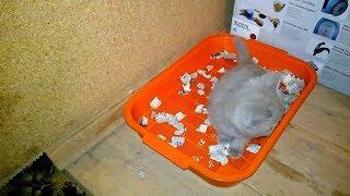 Как приучить котенка или кота к лотку VivaVideo!