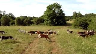 Démonstration de Chasse à Courre par le Vautrait de Ragy