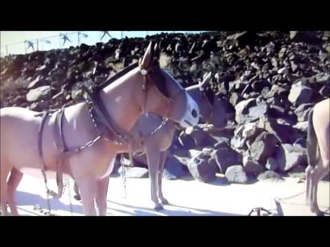 The Story of the 20 Mule Team