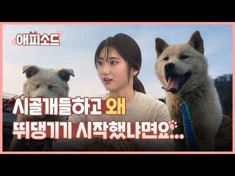 [애피소드] 목줄과 산책은 시골개를 얼마나 행복하게 할까(feat. 조은해 유튜버) / KBS뉴스(News)