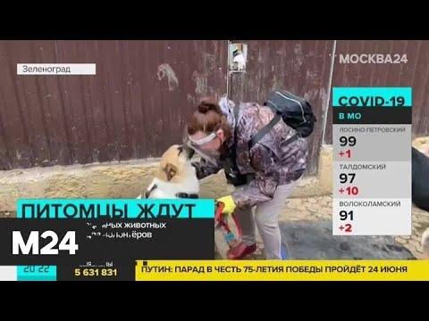 Волонтерам разрешили посещать 13 городских приютов для бездомных собак и кошек - Москва 24