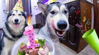 День Рождения щенка Лекси! Собака напала на корову