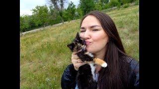 CALICO CAT, МОЙ РАССКАЗ О ТРЕХЦВЕТНЫХ КОШКАХ! ( в съемках принимала участие Куки)