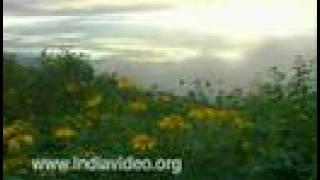Landscape of Chellarkovil, Sunset, Sunflowers, travel destination, Idukki