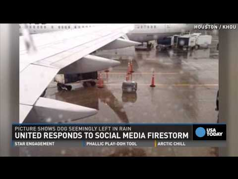 dog-left-on-rainy-tarmac-by-airline-sparks-outrage