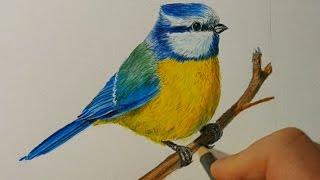 Рисуем синицу цветными карандашами Faber Castell Polychromos