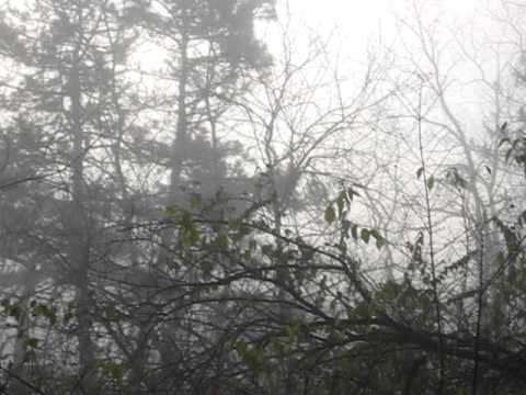 A Murder of Crows in a Foggy Forest [Ault Park, Cincinnati 12.02.2011]