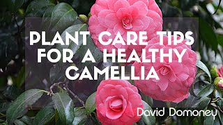 David Domoney camellia plant care tips