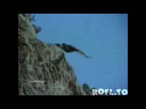 Adler wirft Ziege vom Berg / Eagle throws Goat from the mountain