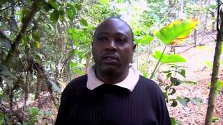Compost Boosts Tea Production in Kenya