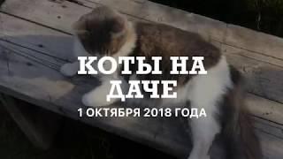 / КОТЫ на ДАЧЕ / ч. 1 /