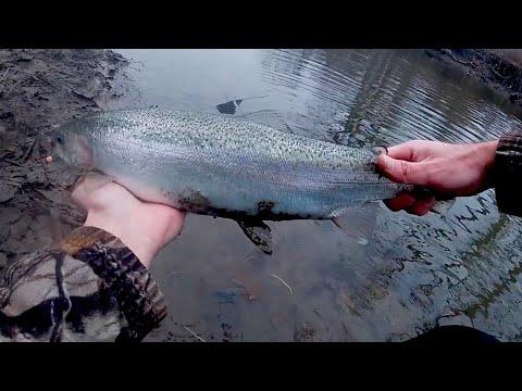 Lake Erie Tributary Steelhead: Simple Float Fishing Tactics (With Spinning Gear) To Find Steelhead