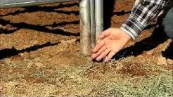 Fly Eliminators - Natural Fly Control for Horses & Livestock