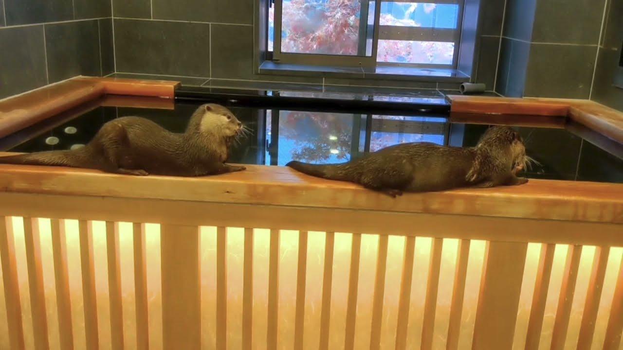 高速おしゃぶりをするカワウソ達 Otters suck at high speed